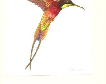 1961 Vintage hummingbird poster Bird print Bird wall hanging picture of crimsonTopaz Vintage bird decor Bird art Bird gift for Hunter