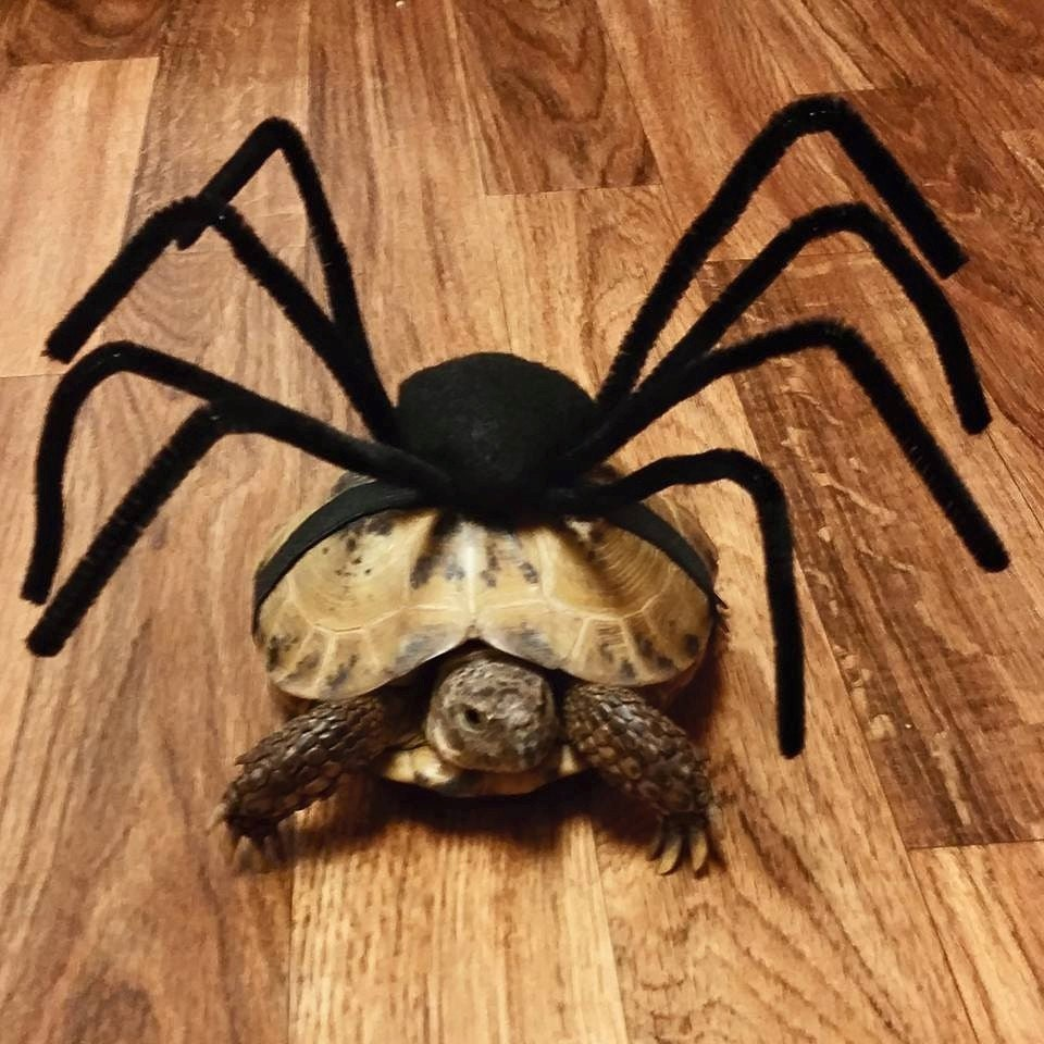 Pet Tortoise Costume Pet Costume Tortoise by DeerwoodCreekGifts
