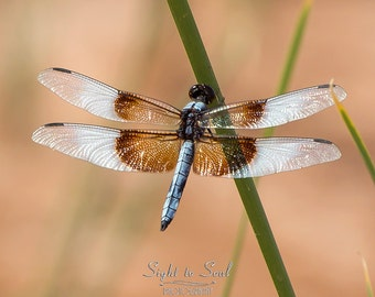 Southwest Art Print, dragonfly wall art, nature photography, southwestern décor, insect print, dragon fly
