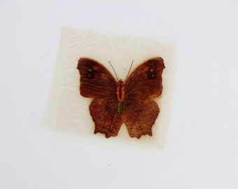 Vintage French Real Butterfly for Mounting - Dark Brown