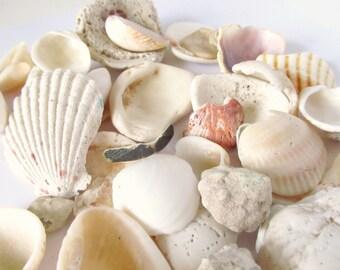 Shell Bead Lot - Seashells - Variety of Sizes and Shaped Shells - Ocean Beads - Beach Supplies - Ocean Theme - Natural Sea Supplies