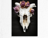 Sheep Skull and Dried Flowers Still Life