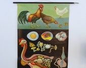 Vintage Chicken School Chart - Large Chicken Print -  Rooster Pull Down Chart - Jung Koch Quentell Original 1970s