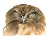 Boobook Owl Original Watercolour Avian Faces Series 8/12