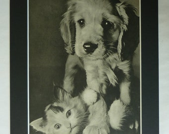 1940s Antique Pet Print of a Cat and Dog, Available Framed, Freinds Art Golden Retriever Puppy Gift Animal Photography Wall Art Kitten Decor