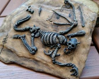 Flying Monkey Fossil