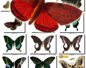 BUTTERFLIES-3 Collection of 1000 vintage illustrations pictures images High resolution 300 dpi digital download printable moths machaon JPG