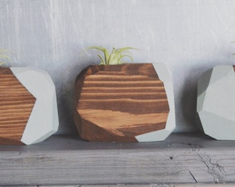 Large Wood Geo Air Plant Holder with Painted Side & Walnut Stain (Includes Air Plant)