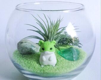 Green Hamster Terrarium Kit