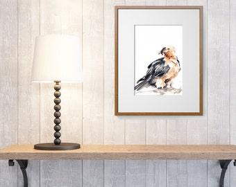 ORIGINAL Watercolor Painting, Lammergeyer Bird, Bird Painting, Watercolour Art