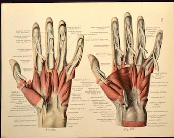 Human Hand Wall Art Print Medical Wall Decor Anatomy Hand