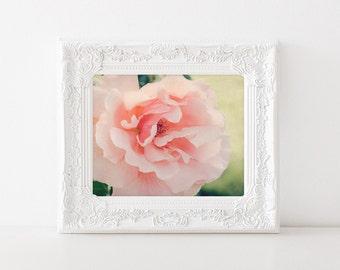 Romantic Bedroom Art - Rose Photography - 5x7 Nature Print - Feminine Floral Home Decor - Peach Rose - Pastel Flower Photo Art Print