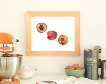 Apricots Print, Apricot Food Art, Food Illustration, Food Print, Apricot Watercolor, Kitchen Decor, Kitchen Wall Art, Fruit Art, Fruit Decor