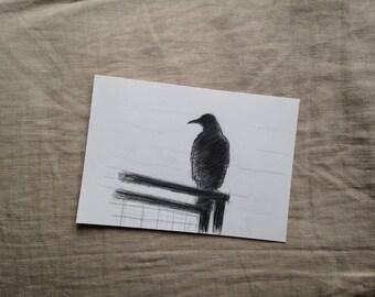 crow drawing, original drawing, pencil drawing, raven drawing