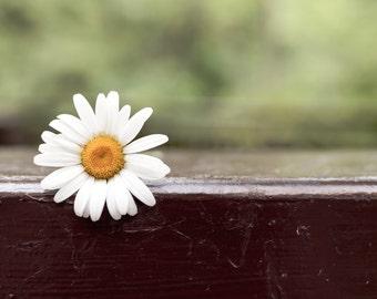 Daisy Print, Flower Photography, Daisy Art, Flower Wall Art, Daisy Photography, Flower Black and White, Flower Print