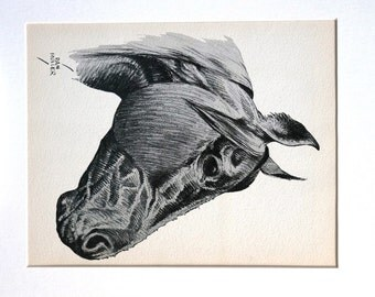 Dan Muller HORSES 1936 First Ltd Edition - Dan Portrait of a  FARM HORSE - Professionally Matted Vintage Print Ready to Frame