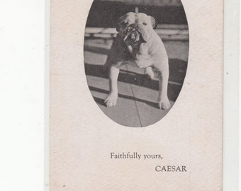 Caesar The Bulldog Advertises The Brookfield Ma Inn,  He's Here To Greet You,Unused C 1910 Postcard