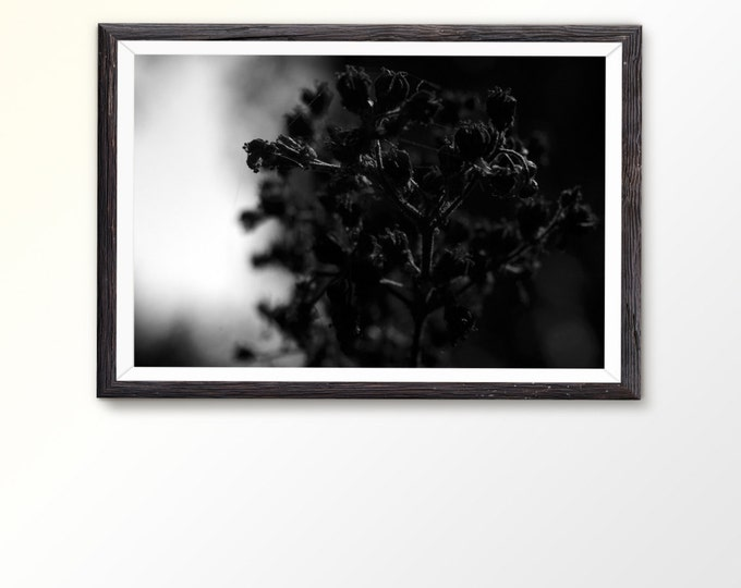Instant Download Digital download Nature Wall Art Print Black and White Print Macro photography Nature photography Plant photography Meadow
