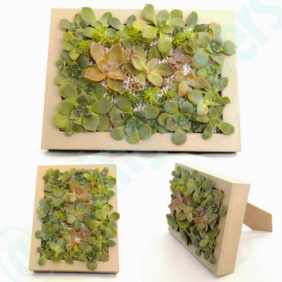 Living Succulents Wall Vertical Garden Small By