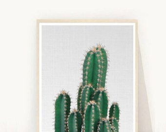 BotanicalPrint, Cactus Photo, Printable Art, Cactus print,  Cactus Wall Decor, Wall Art, Instant Download