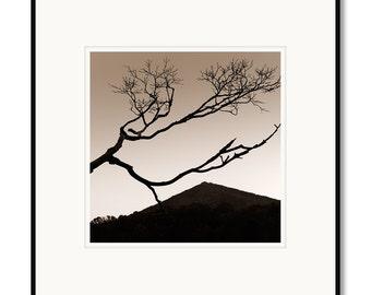 Black and white framed photography, sepia prints, dogwood tree, Peaks of Otter, Virginia, blue ridge parkway, Abbott lake
