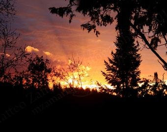 Forest Sunrise || PHYSICAL PRINT