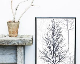 Scandinavian Print, Forest Print, Tree Art, Black And White Wall Art, Art Print, Giclee print,  Poster
