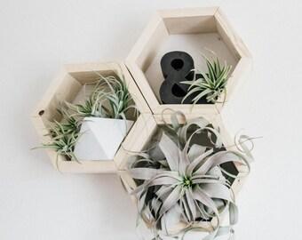Honeycomb Shelf TRIO