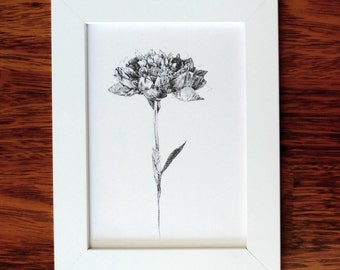 Flower Natural Ink Drawing - Quality Print 13x18