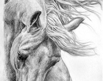 Horse pencil drawing head study A5