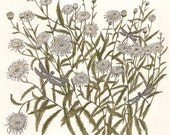 Daisies and Dragonflies - Print