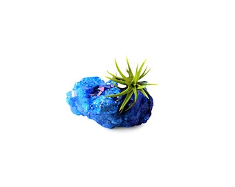 Crystal Air Plant Terrarium - Blue Quartz Crystal Formation - Air Plant Garden - Naturalist Gift - Air Plant Holder - Geometric Planter
