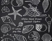 White Hand Drawn Seashell Clipart, Shell clip art, Digital Stamps, Summer Beach, PNG clipart, For Personal and Commercial Use