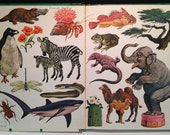 Very Rare Natural History Adventures by Marion B. Carr of The American Museum of Natural History, Illustrated by Craig Pineo ~ Golden Press