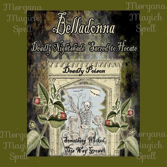 Belladonna the Witch's Herb