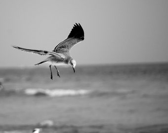 Flying Sea Gull Black and White Photo