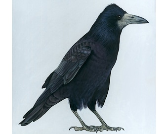 Giclee Fine Art Print of 'Vincent the Rook' Original Oil Painting