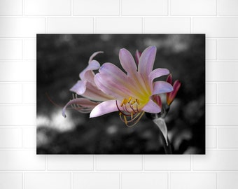 Suprise Lily - Floral Print - Nature Photo - Flower Photography - Wall Decor - Home Decor - Still Life Art - Nature Photography - Pink Lily