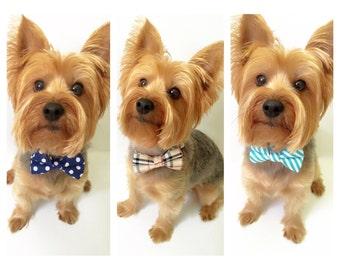 Dog collar with Bow tie ,cat collar, cute collar , bow, collar