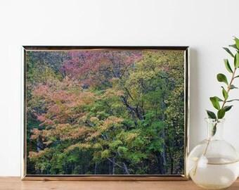 Nature Photography – Wall Art Print – Fall Colors Art – Photography Prints – Autumn Colors – Colorful Tree – Smoky Mountains Art
