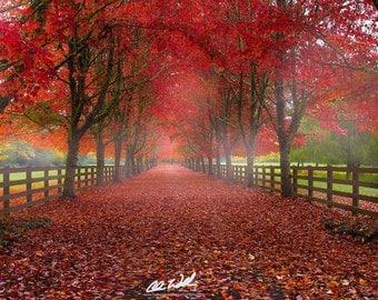 Essence of Fall, fall color, autumn, fall, wall art, landscape, photography, photo, nature, photo, print