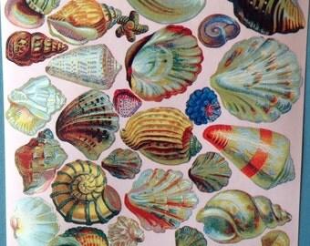 Seashell stickers, lots of seashells, at least 45 stickers on sticker sheet