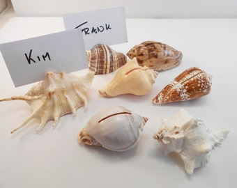 12 Brown White Seashell Place Card Holders Beach Wedding Favor Nautical Party Decor Sea Shell Table Sets