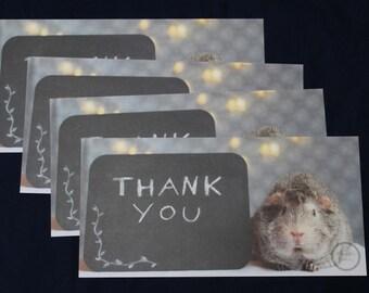 Guinea Pig Thank You Cards