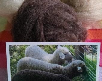Cormo Wool Package