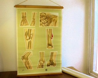 Vintage medical poster wall chart St John Ambulance London 1960's fractures PROP