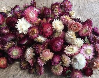 Dried Strawflower heads (pink tones).