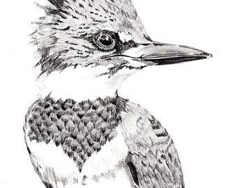 Pencil Sketch of a Hummingbird