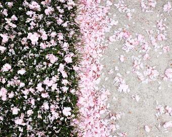 Flower Photography, Nature Photography, Garden Photography, Flower Photo, Flower Print, Fine Art Print, Wall Art, Cherry Blossom, Farewell