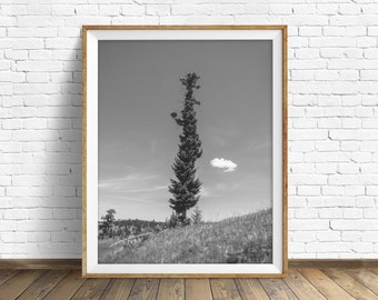 "black and white, photography, large art, printable art, instant download printable art, digital download, nature - ""High Country Pine Tree"""